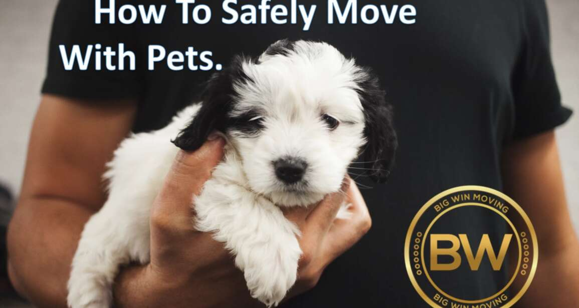 Safely Move with Pets